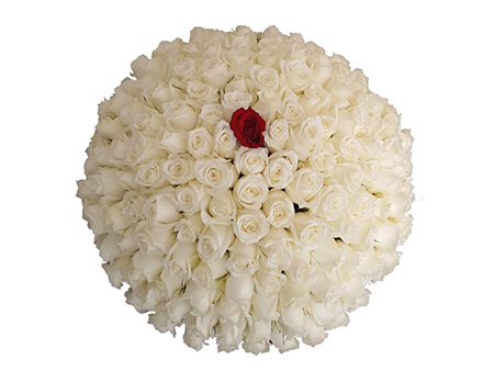 One in a Million ( 200 Roses )