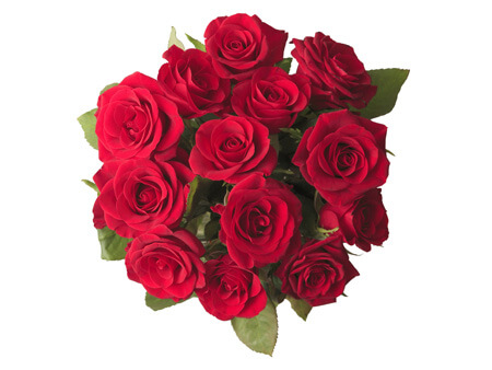Pure_LoveAED_260_(13 roses)